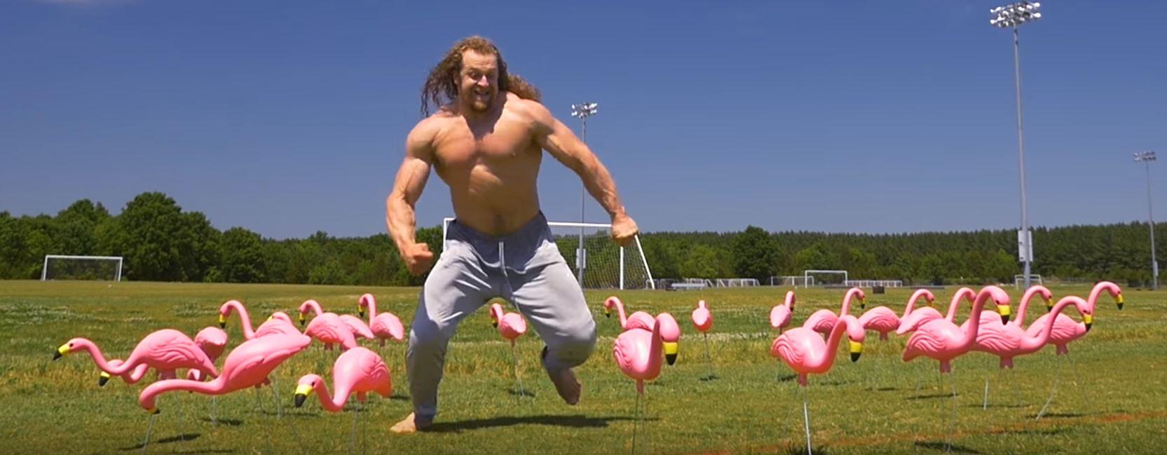 Jujimufu kicking Flamingos
